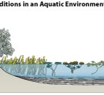Abiotic conditions in an aquatic environment