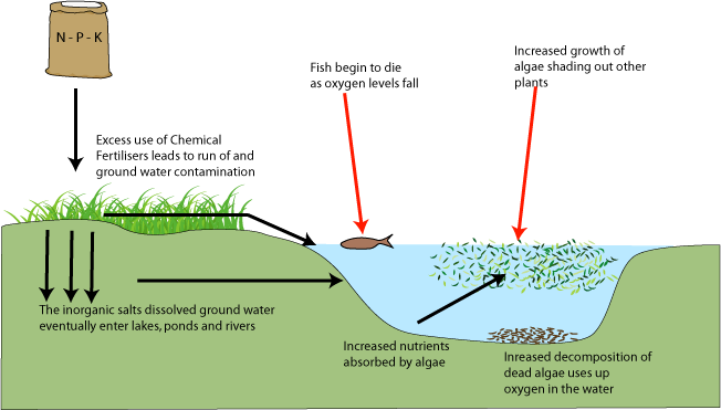 external image eutrophication.png