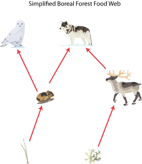 picture of food chain and food web. 3: Food chains and Food webs